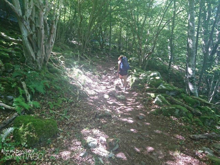 bosque canal de francos