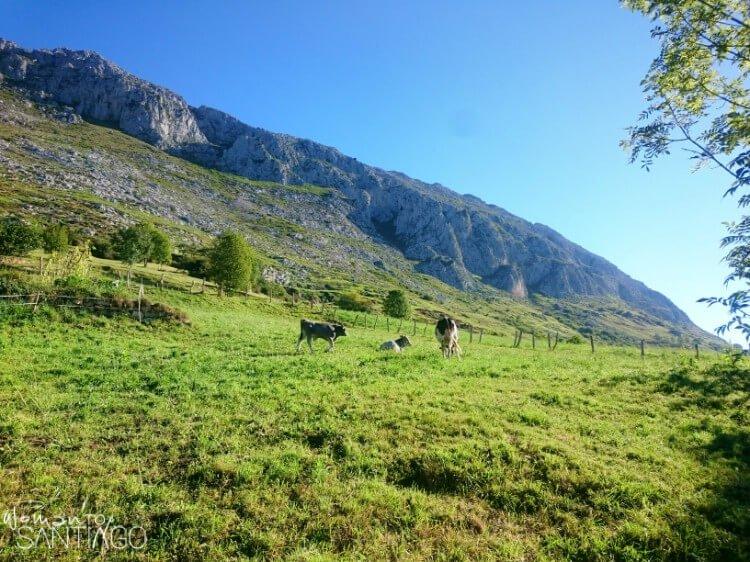 campo verde con ganado