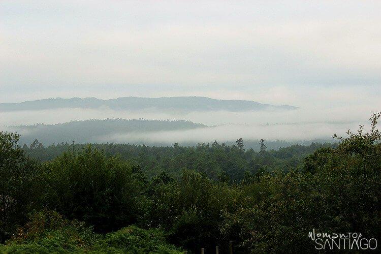 Bosque frondoso entre Padrón y Santiago de Compostela