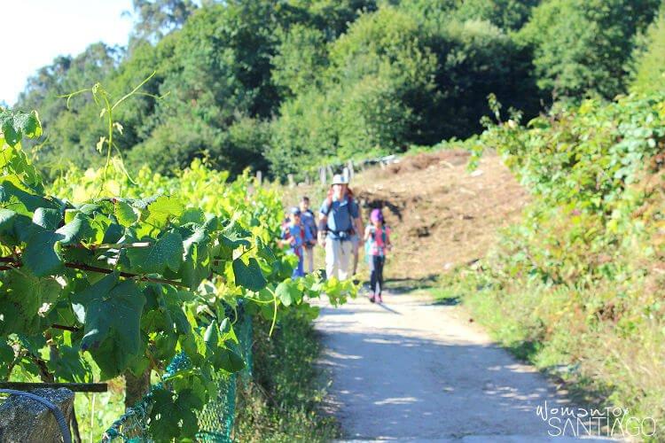 padre e hijos caminando en el camino de santiago