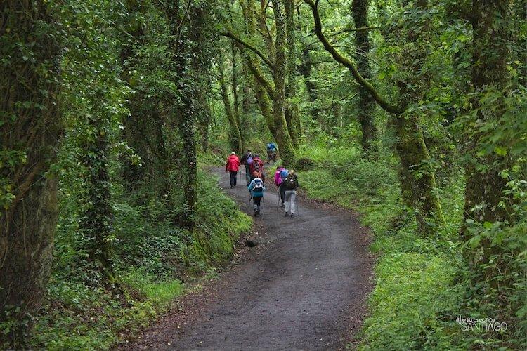 peregrinos por sendero
