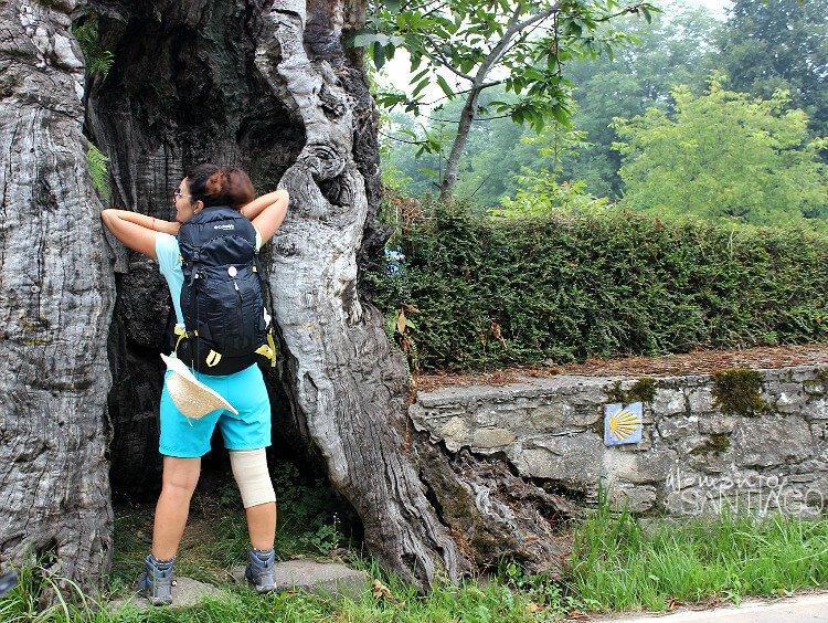 Noe descansado en un árbol milenario