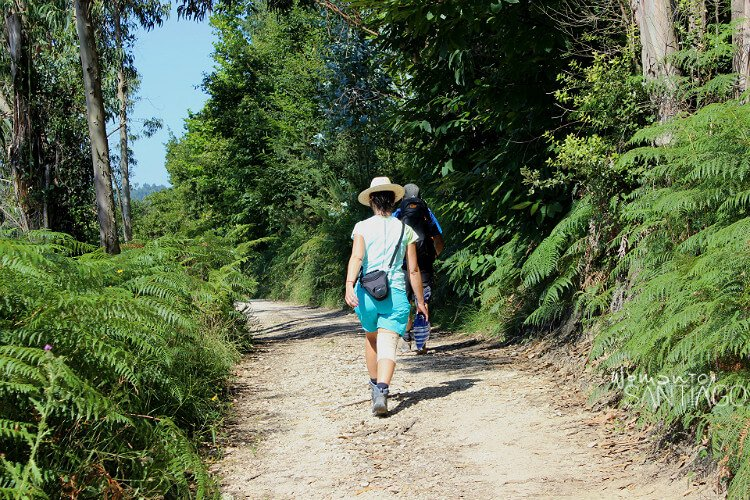 peregrinos caminando por sendero