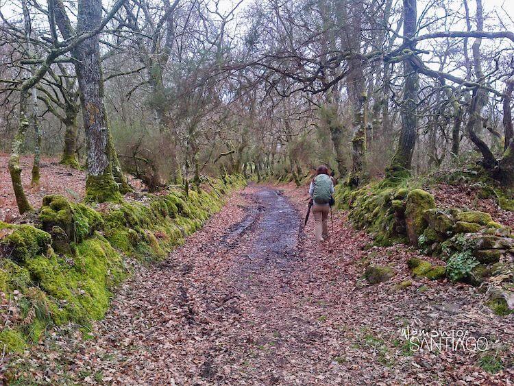 Peregrina andando por un sendero con hojas marrones
