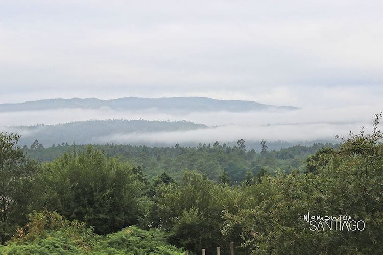 Bosques de Libredón