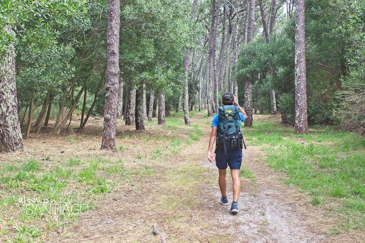 peregino caminando por bosque