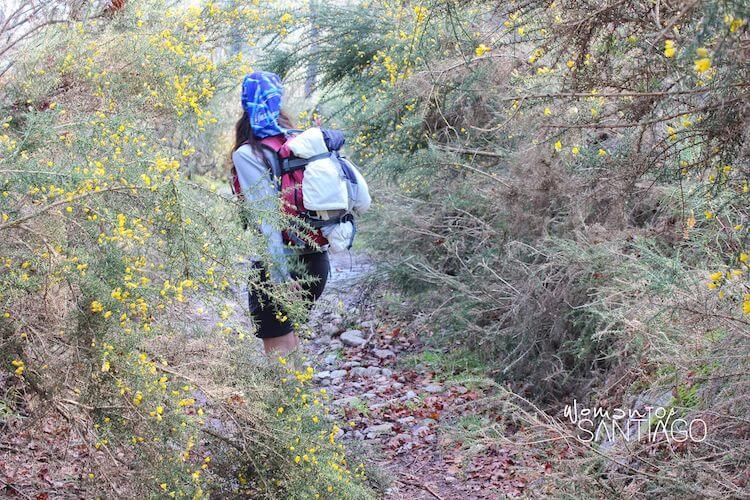 Peregrina caminando en bosque frondoso
