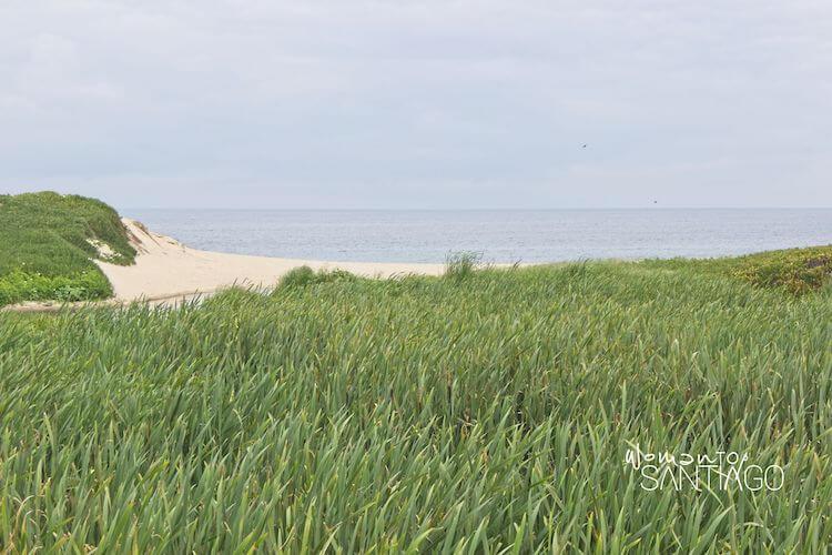 Dunas de arena en la costa del Camino