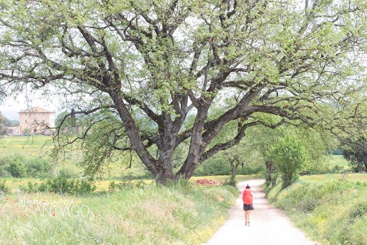 Mujer pasea por el Camino de Santiago