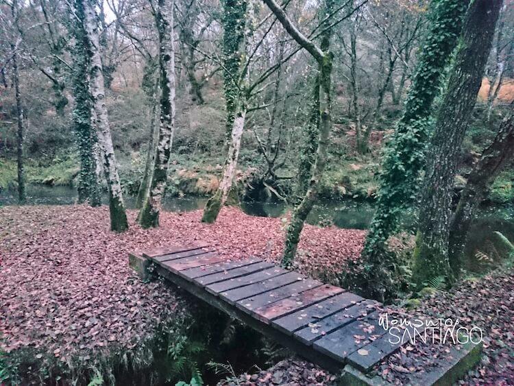pequeño puente de madera en un hayedo