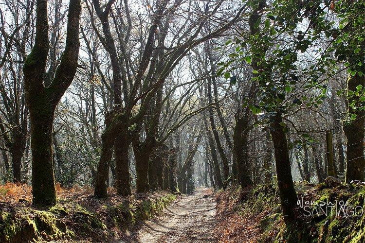 Bosque del Camino de Santiago por la Vía de la Plata