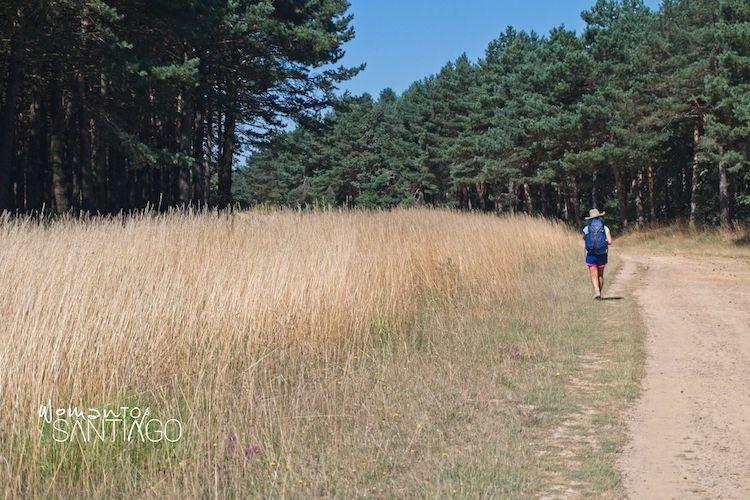 Buscando secretos de una ruta mágica en el Camino Francés