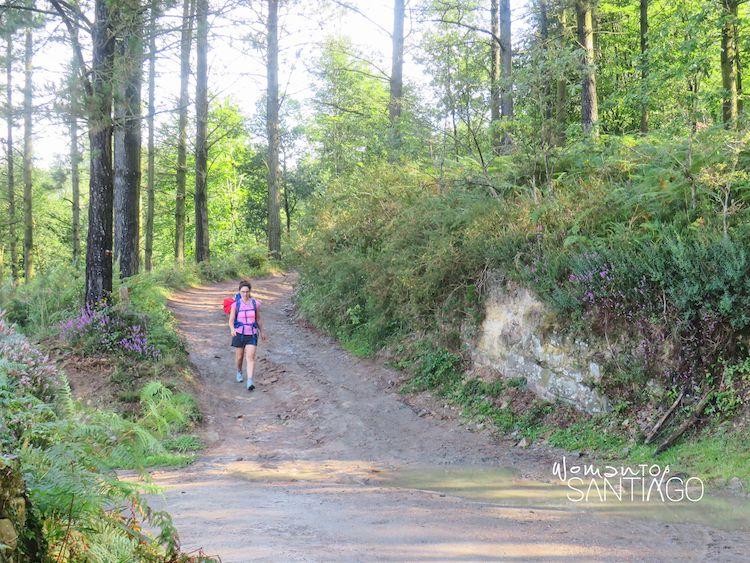 Camino en el bosque con peregrina