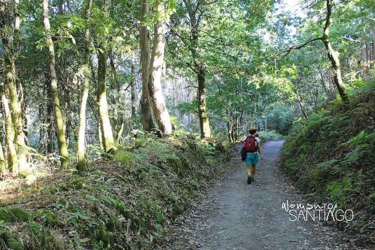 Camino portugués por Pontevedra en Barro
