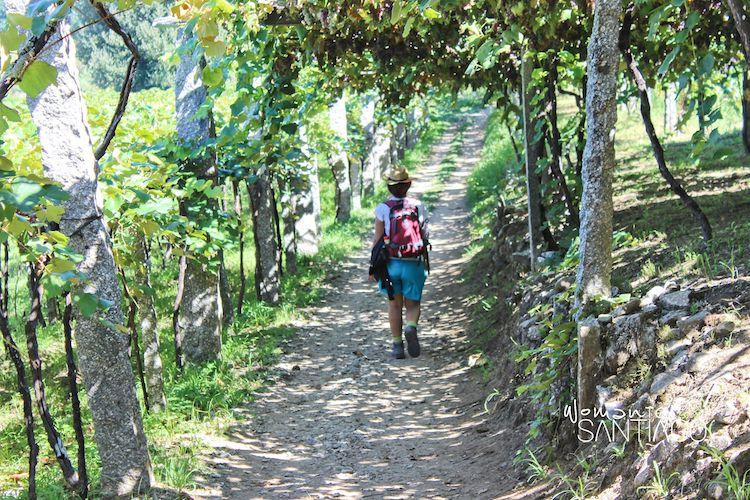 Camino Portugués por Pontevedra en Caldas de Reis