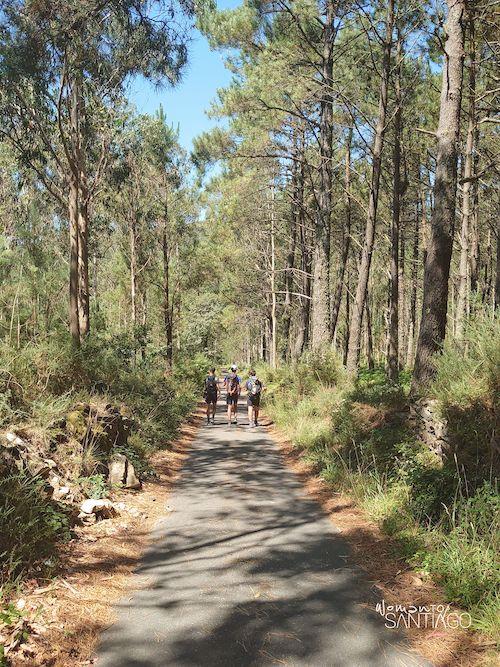 Camino de Santiago entre árboles