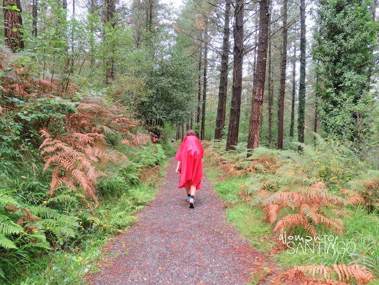 Peregrina bajo la lluvia en un bosque de coníferas de Marmiz