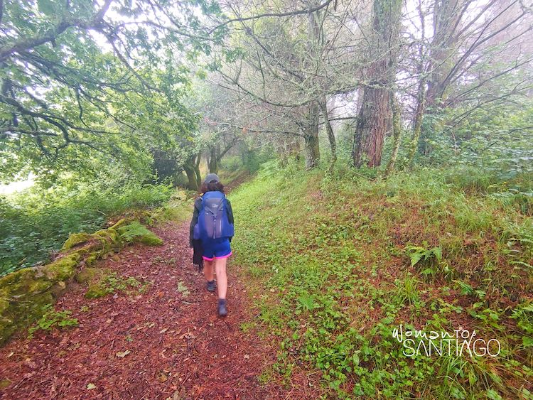 senda boscosa del Camino de Santiago